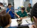11 カランビン野生動物病院実習