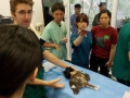 12 カランビン野生動物病院実習