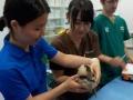 18 カランビン野生動物病院実習