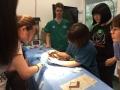 26 カランビン野生動物病院実習