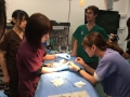 27 カランビン野生動物病院実習