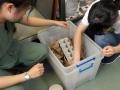 32 カランビン野生動物病院実習