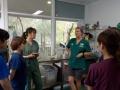 33 カランビン野生動物病院実習