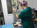 54 カランビン野生動物病院実習