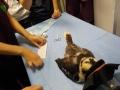57 カランビン野生動物病院実習