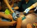 6 カランビン野生動物病院実習