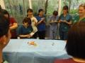 62 カランビン野生動物病院実習