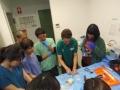 76 カランビン野生動物病院実習