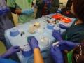 85 カランビン野生動物病院実習