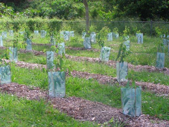 プレンヴェイル小学校の校庭での植樹