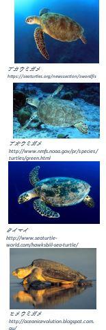 ウミガメ画像