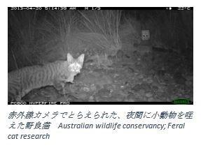 ニューズレター用:猫記事3