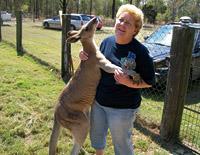 ruth-kangaroo