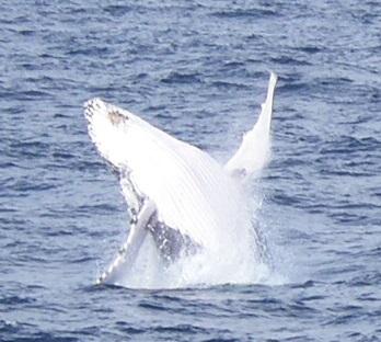 whale2010