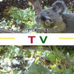 AJWCEF メディア掲載 TV